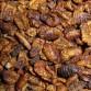 Zijderupsen (2,5 Liter)